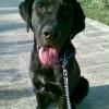 Stefan Gauci